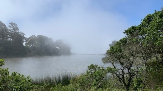 Schwan Lake